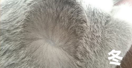 猫 冬の毛