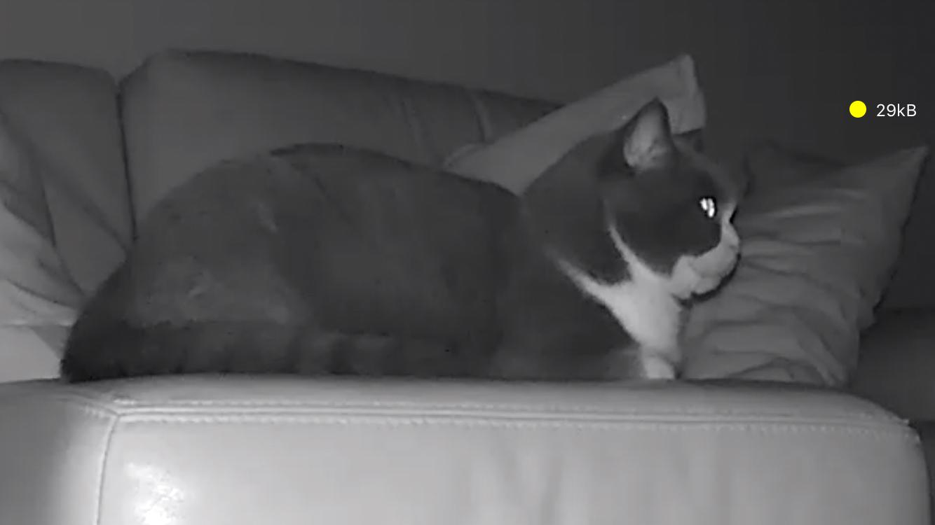 ペット監視カメラ 夜間(暗闇)暗視赤外線カメラ ズーム