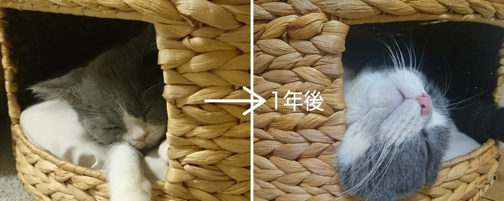猫のおうち(ちぐら)かご