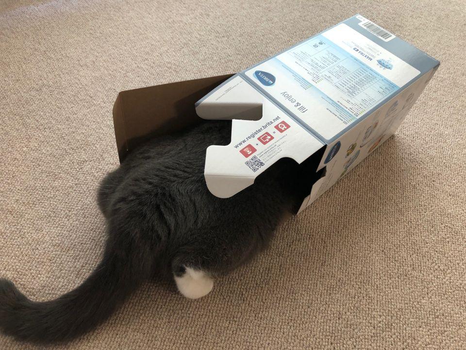 BRITA 猫の飲み水に