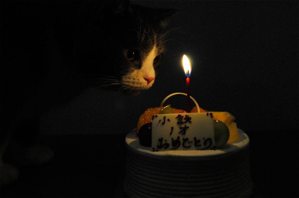 猫のお誕生日ケーキ