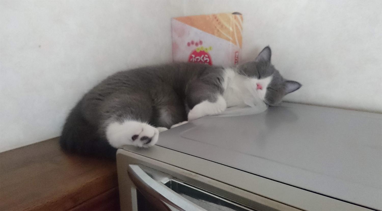 家電製品の上に乗る猫