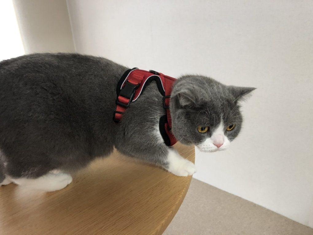 猫用ハーネス(散歩)