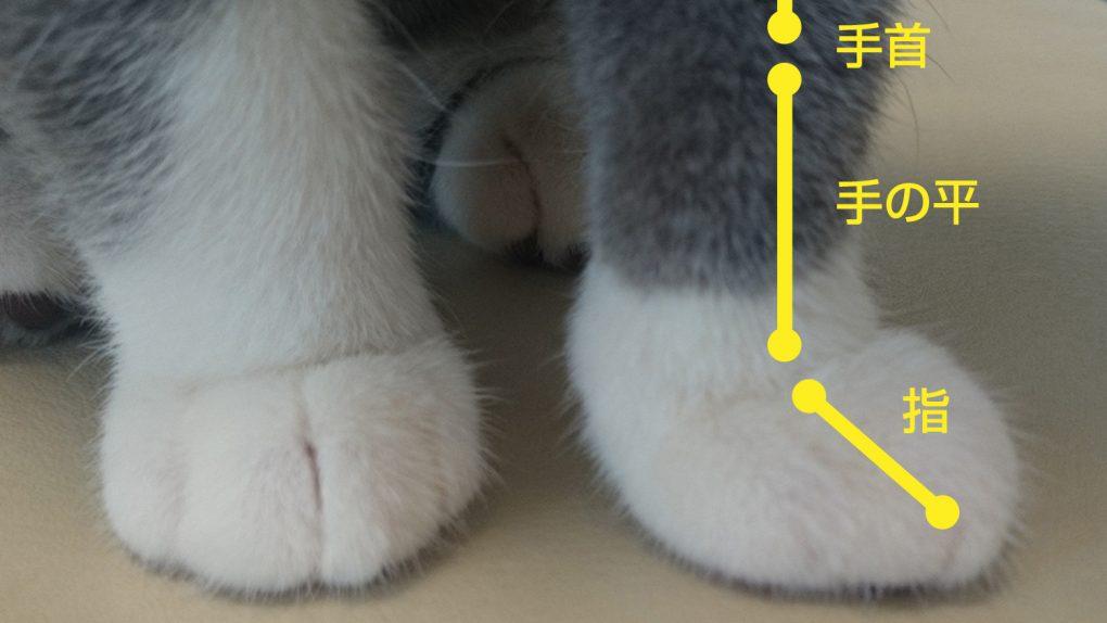 猫 関節の骨(手・指・手首)