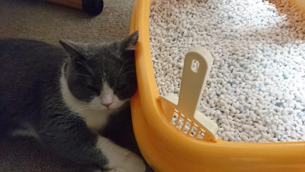 トイレを枕にする猫