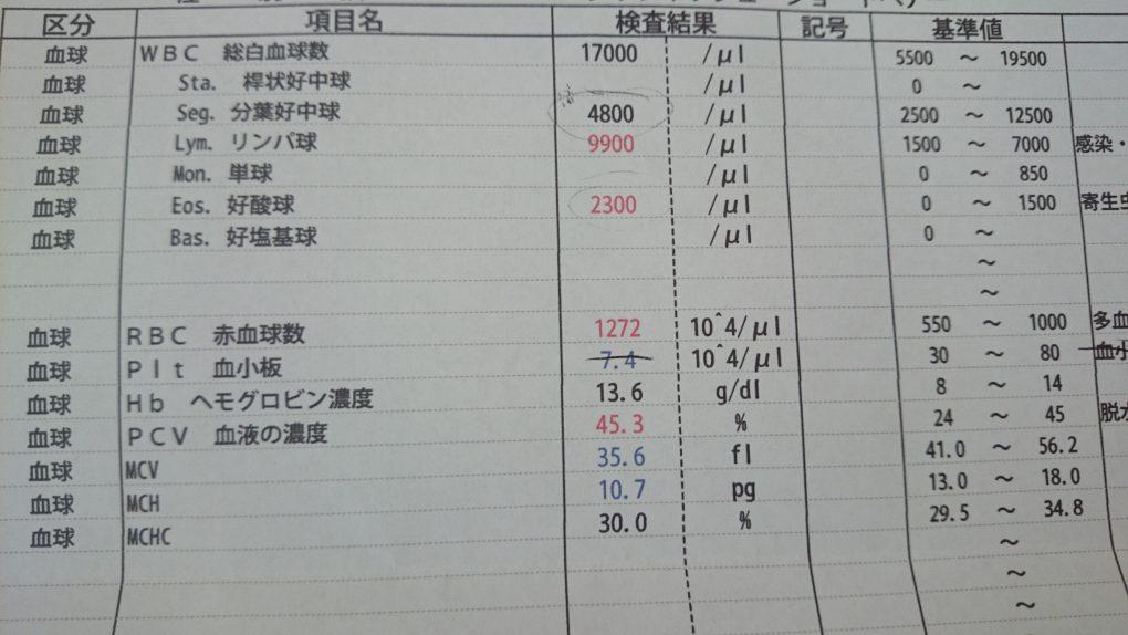 猫・血液検査(白血球が多い)