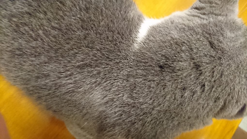 アドボケート猫