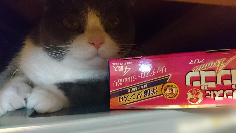 猫は、押入れ(クローゼット)が大好き