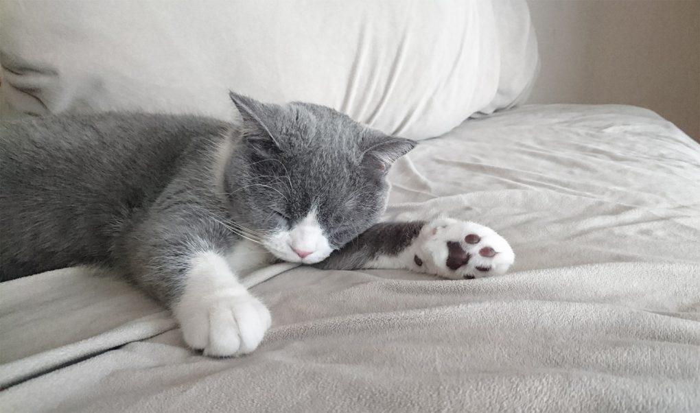 ベッド(布団)で寝る猫