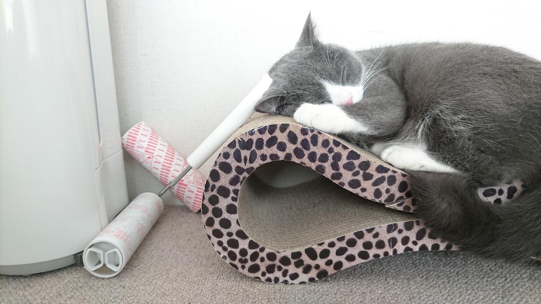 超粘着クリーナーコロコロが好きな猫