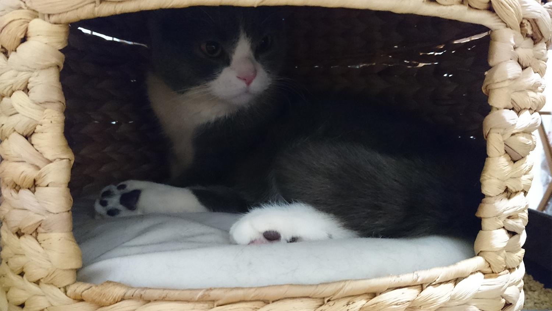 猫の家(ちぐら)の中にもマタタビ