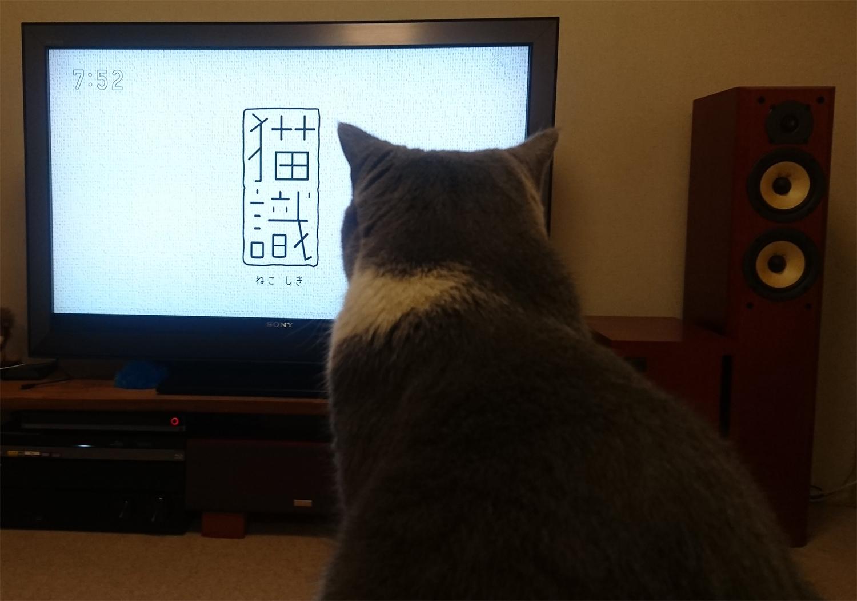 岩合光昭さん世界ネコ歩き「猫識」