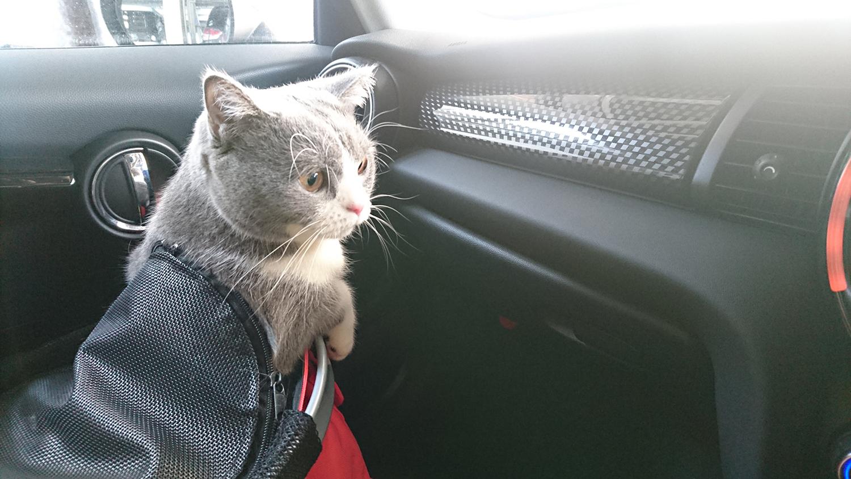 猫を車に乗せるとなく