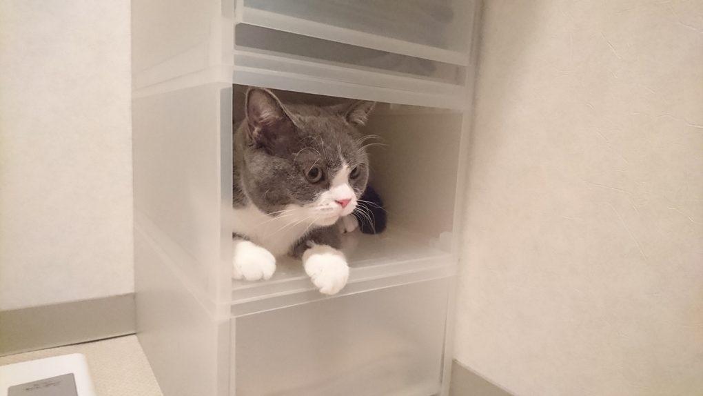 収納BOXに納まる猫