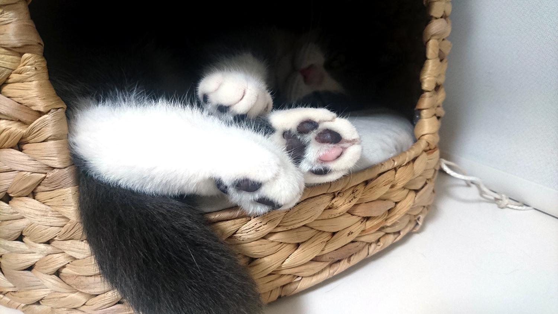 ネコの肉球(ピンク・茶色・黒・こげ茶)
