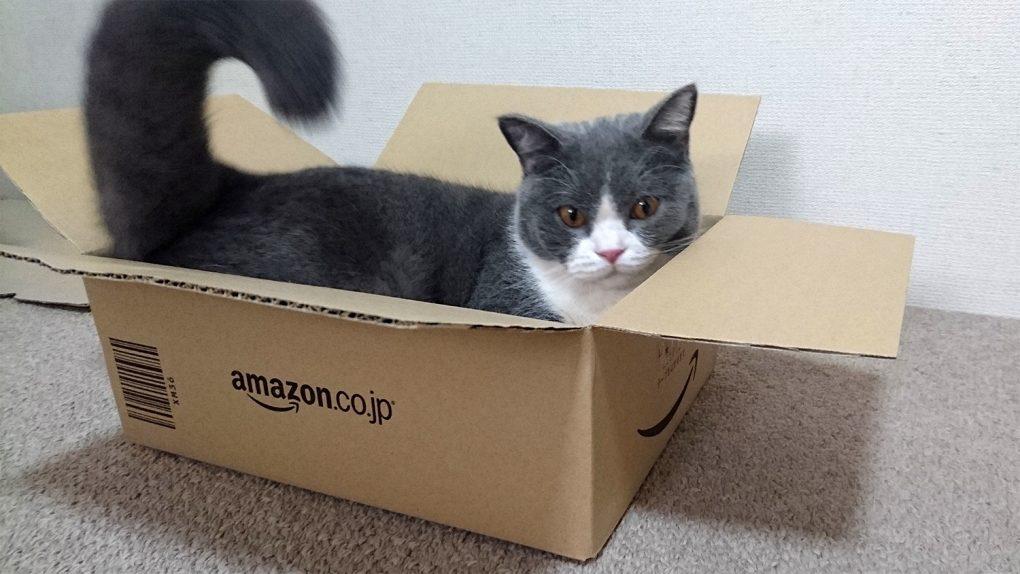 amazon(アマゾン)の箱(XM36サイズ)に猫が入る