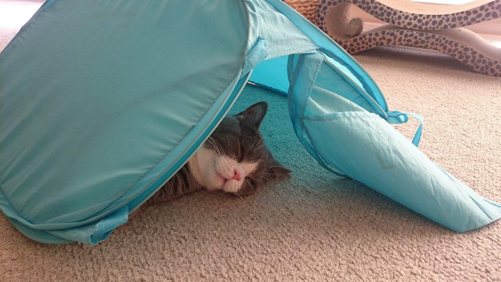 テント生活の猫