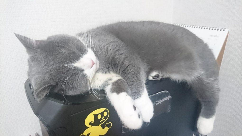 パソコン(Gateway)にのる猫