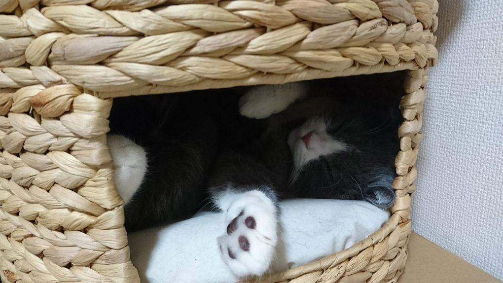 猫ハウス(ちぐら)に入って寝ます
