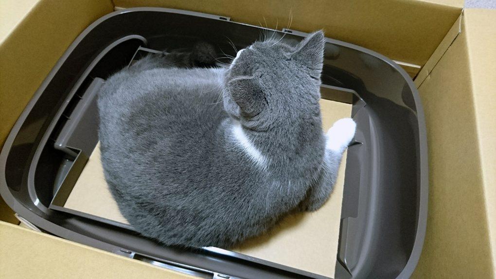花王 ニャンとも清潔トイレ 箱に入る猫