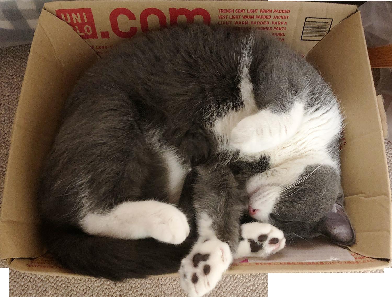 UNIQLO感謝祭のダンボールが猫ベッドに