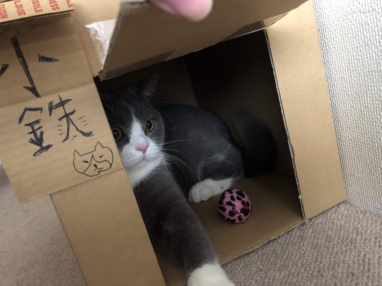 猫用ダンボールハウス(手作りDIY)