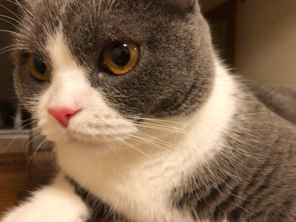 猫の鼻が真っ赤