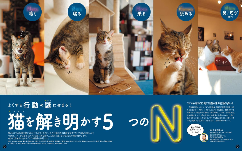 猫のきもち2018年2月号