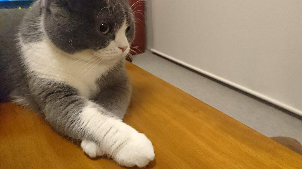 足(手)を組む猫